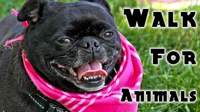 Walk_for_animals_052612-0136