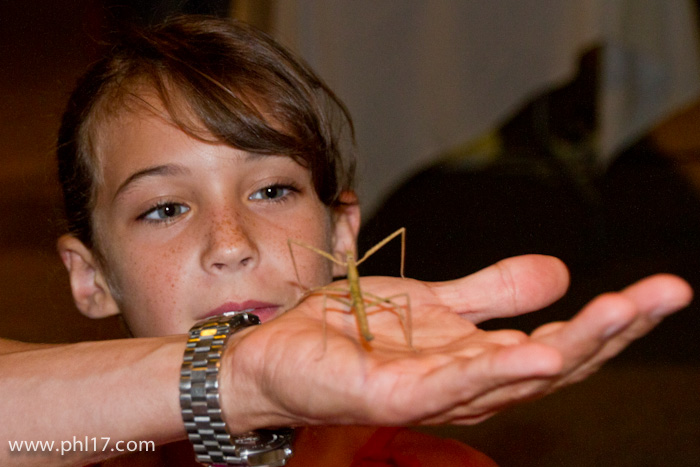 Drexel-Bug-Fest-081212-4128