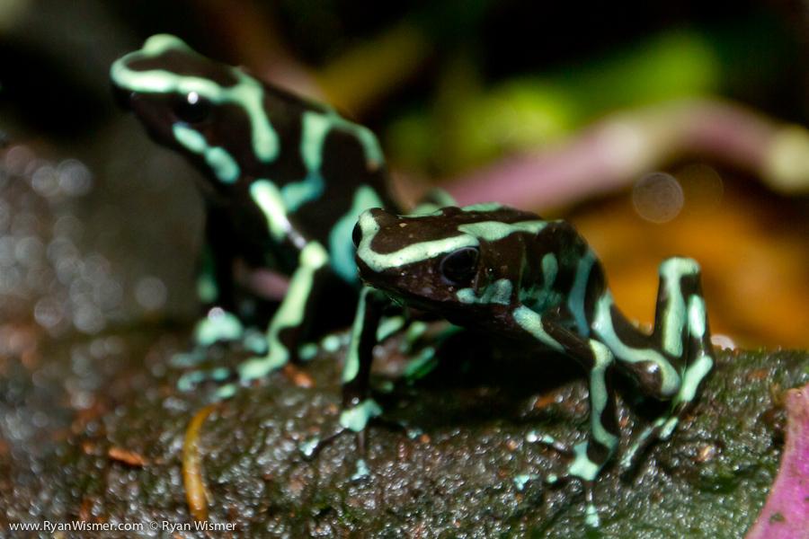 Aquarium Frogs Related Keywords & Suggestions - Aquarium Frogs Long ...